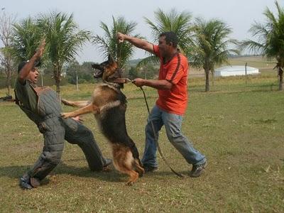adestramento1